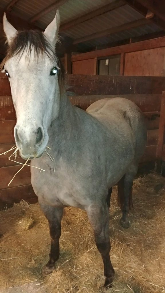 Stephanie West's Horse