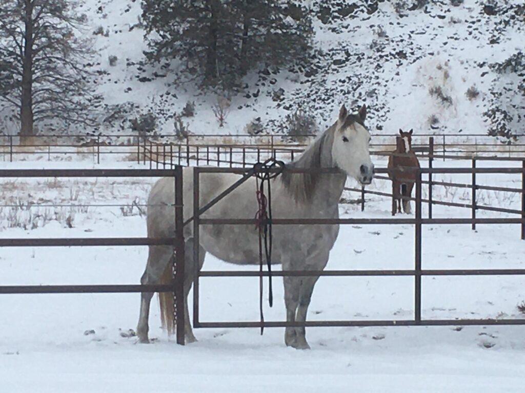 West's Horse